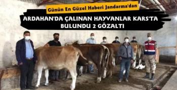 Kars Jandarmadan Hayvan Hırsızlarına Darbe 2 Gözaltı