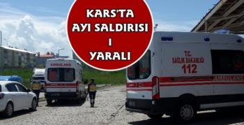 Kars'ta Ayı Saldırısı 1 Yaralı
