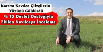 Vali Türker Öksüz Kavılca Tarlalarını İnceledi