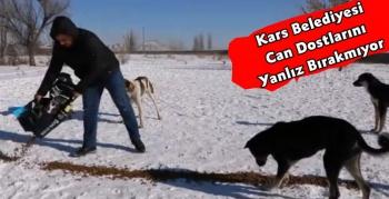 Kars Belediyesi Sokak Hayvanlarını Unutmuyor