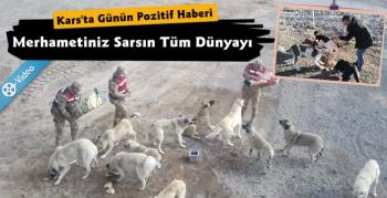 Kars'ta Jandarma ve Belediyeden Soğuk Havada Sokak Hayvanlarına Mama Desteği