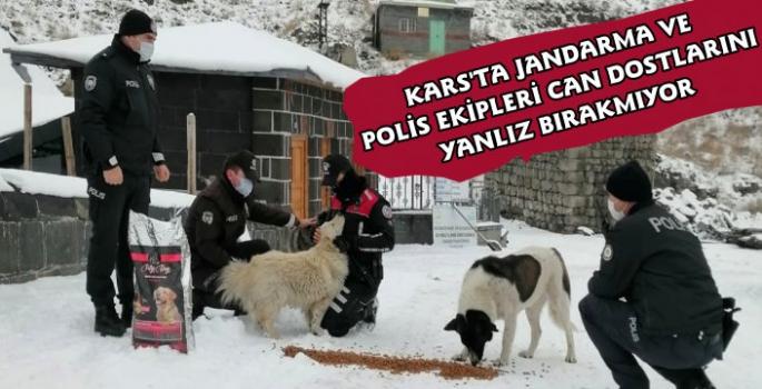 Kars'ta Jandarma ve Polis Ekipleri Sokak Hayvanlarını Unutmadı